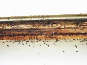 ant damage