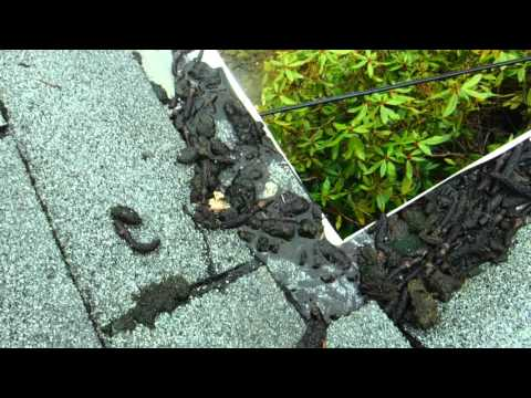 LeafFilter gutter guard Tacoma